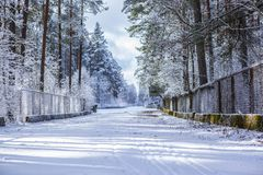 Snowy afternoon, entrance to race track, track boundary, forest track. Snowy and sunny afternoon racing track, The track is built in a pine and mixed tree royalty free stock photography