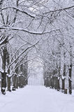 Snowy alley. Winter snowy alley in December Stock Photography