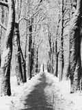 Snowy alley. Park covered with snow Royalty Free Stock Photo