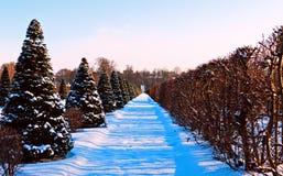 Snowy alley of the Lower Garden. Oranienbaum. Stock Image