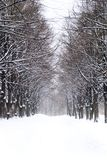 Snowy alley in the park. Winter alley in the park stock image