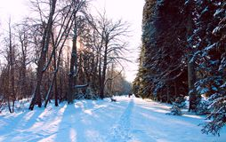 Snowy alley in the Park. View of the snowy alley in the Park with trees covered in snow Stock Image