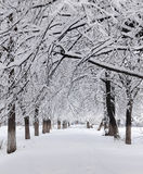 Snowy alley in the Park Stock Photography