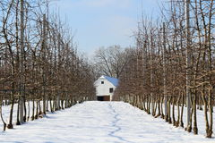 Snowy alley to farmstead Stock Photography