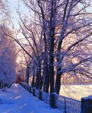 Snowy alley. Winter. Alley in Nikolo-Ugreshsky monastery. Dzerzhinsky, Moscow oblast. Sunset stock image