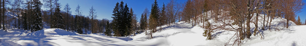 Snowy alpine forest panorama