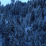 Snowy Alpine Pine Tree Forest stock photo