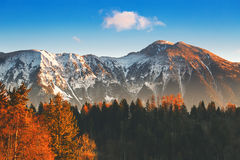 Snowy alps and autumn forest on sunrise. Stock Image