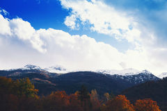Snowy alps and autumn forest on sunrise. Stock Images