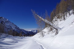 Snowy Alps. View of a snowy landscape with trees, footprints of hikers and a blue sky Stock Images