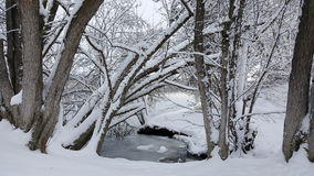 The snowy arch. Snow covered trees arching over a frozen creek Royalty Free Stock Photography