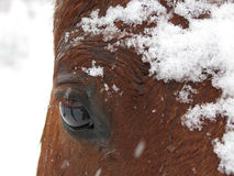 Snowy-Auge Stockfotos