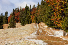 Snowy autumn road with pine trees. Sunny autumn road in the romanian provence of Transylvania on first snow Royalty Free Stock Image