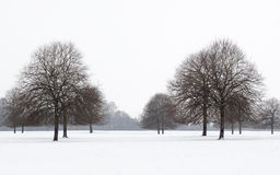 Snowy avenue of trees in winter Stock Photography