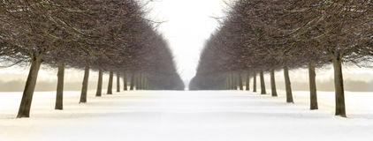 Snowy avenue of trees in winter Stock Photo