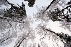 Snowy-Bäume Lizenzfreie Stockfotos