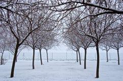 Snowy-Bäume stockfotografie