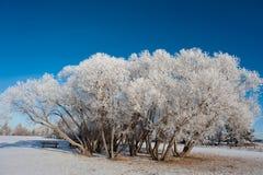Snowy-Bäume Stockfotos