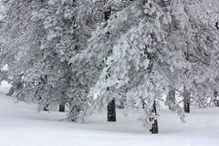 Snowy-Bäume Lizenzfreie Stockfotografie