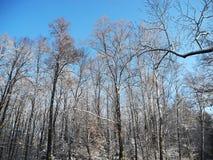 Snowy-Bäume Lizenzfreies Stockfoto