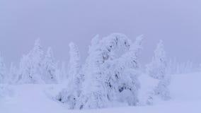 Snowy-Bäume in den Bergen Lizenzfreie Stockbilder