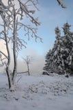 Snowy-Bäume an den deutschen Hügeln nannten Rothaargebirge Stockfotografie