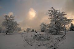 Snowy-Bäume an den deutschen Hügeln nannten Rothaargebirge Lizenzfreies Stockbild