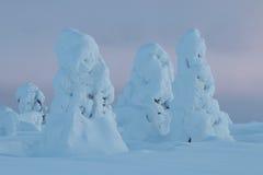 Snowy-Bäume in finnischem Lappland Stockbilder