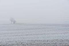 Snowy-Bäume im Nebel während des Winters Lizenzfreies Stockbild
