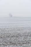 Snowy-Bäume im Nebel während des Winters Lizenzfreie Stockbilder