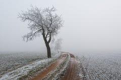 Snowy-Bäume im Nebel während des Winters Stockfotos