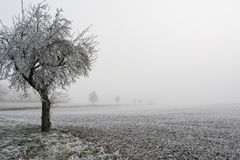 Snowy-Bäume im Nebel während des Winters Stockbild