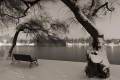 Snowy-Bäume im Park Lizenzfreies Stockbild
