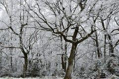 Snowy-Bäume mit Zaun und Schnee Lizenzfreie Stockfotos