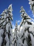 Snowy-Bäume am Salz-Nebenfluss Stockbild