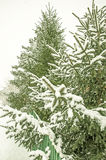 Snowy-Bäume am Tag Stockbilder