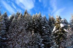 Snowy-Bäume umfassten Raureif Stockbilder