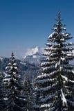Snowy-Bäume und Berge stockbilder