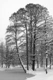 Snowy-Bäume und gefrorener See Stockbild