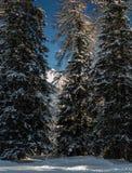 Snowy-Bäume vor majestätischem Panorama Stockbilder