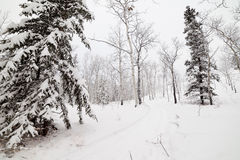 Snowy backcountry winter trail in Yukon T Canada Stock Photo