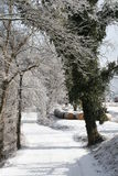 Snowy Backroad. Background covered with snow and ice. Leafless trees covered in snow and ice. Walnut tree covered in ivy. Hay bales in the background along side royalty free stock image