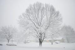 Snowy Backyard Stock Images