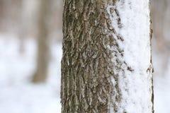 Snowy Bark Stock Photos