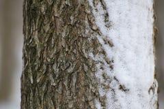 Snowy Bark Royalty Free Stock Photography