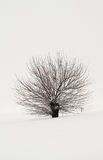 Snowy-Baum stockfotos