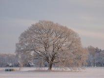 Snowy-Baum Stockfoto