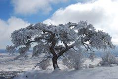 Snowy-Baum Stockbild