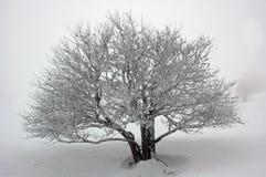 Snowy-Baum. Lizenzfreie Stockfotos