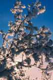 Snowy-Baum lizenzfreie stockbilder
